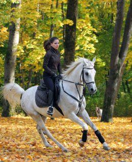 Equestrian Fashion (showcased by model riding through the woods)