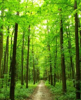 Happiness: spend time in a beautiful forest like this one to feel happier