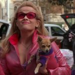 Legally Blonde, pet pooch