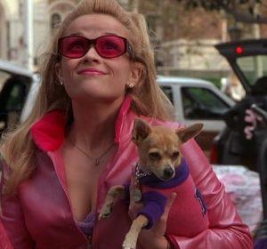 Legally Blonde, pet pooch