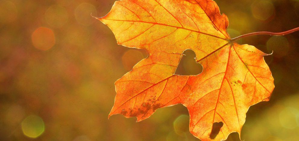 ideas for autumn