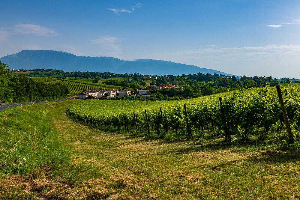 wine regions 1