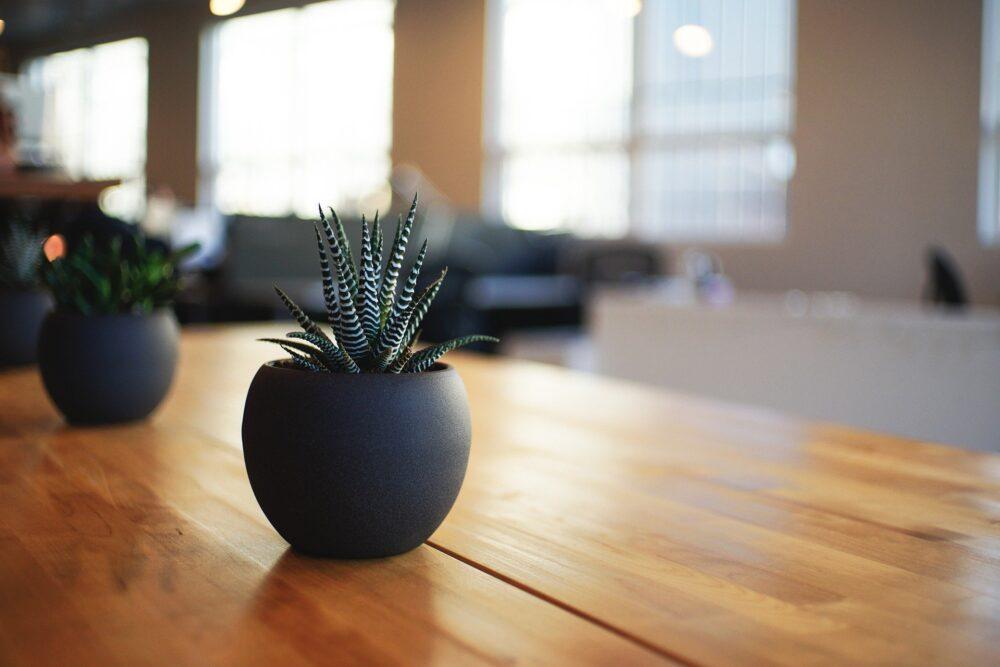 interior design scheme, plants
