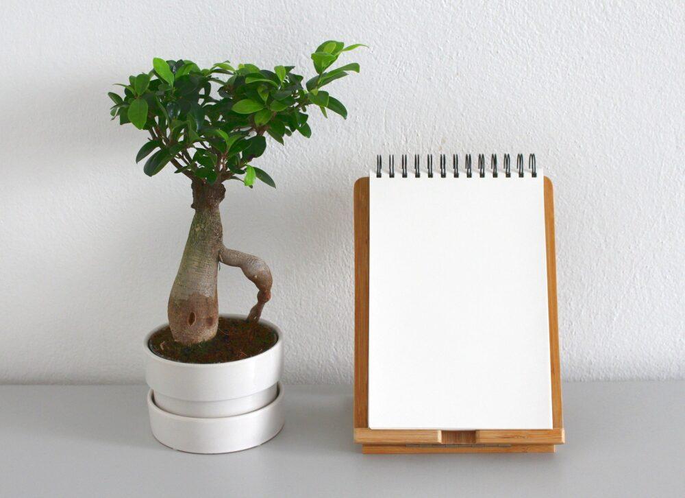 bonsai tree & note pad
