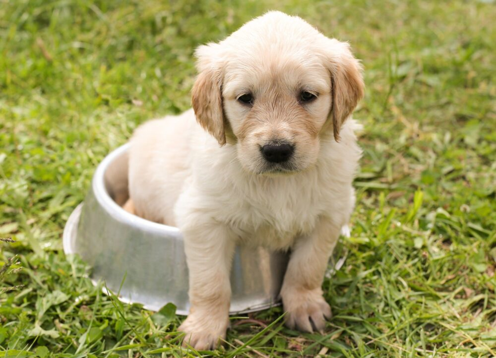 puppy sitting in a food bowl